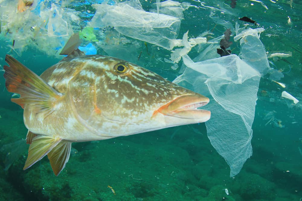 Plastic Oceans – A Dangerous Trend for Shipping & the World