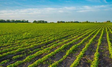 U.S. Soybean Exports Decrease to Zero Due to the U.S.-China Tariff War