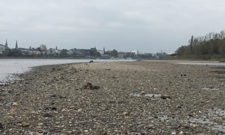 Rhine's Low Water Levels Disrupted Shipping in Europe